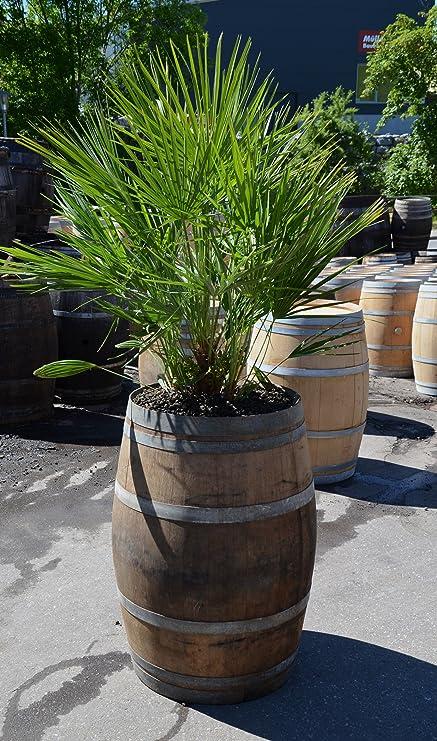 Große Pflanzkübel Für Palmen.Temesso Pflanzkübel Pflanztrog Groß Winterfest Aus