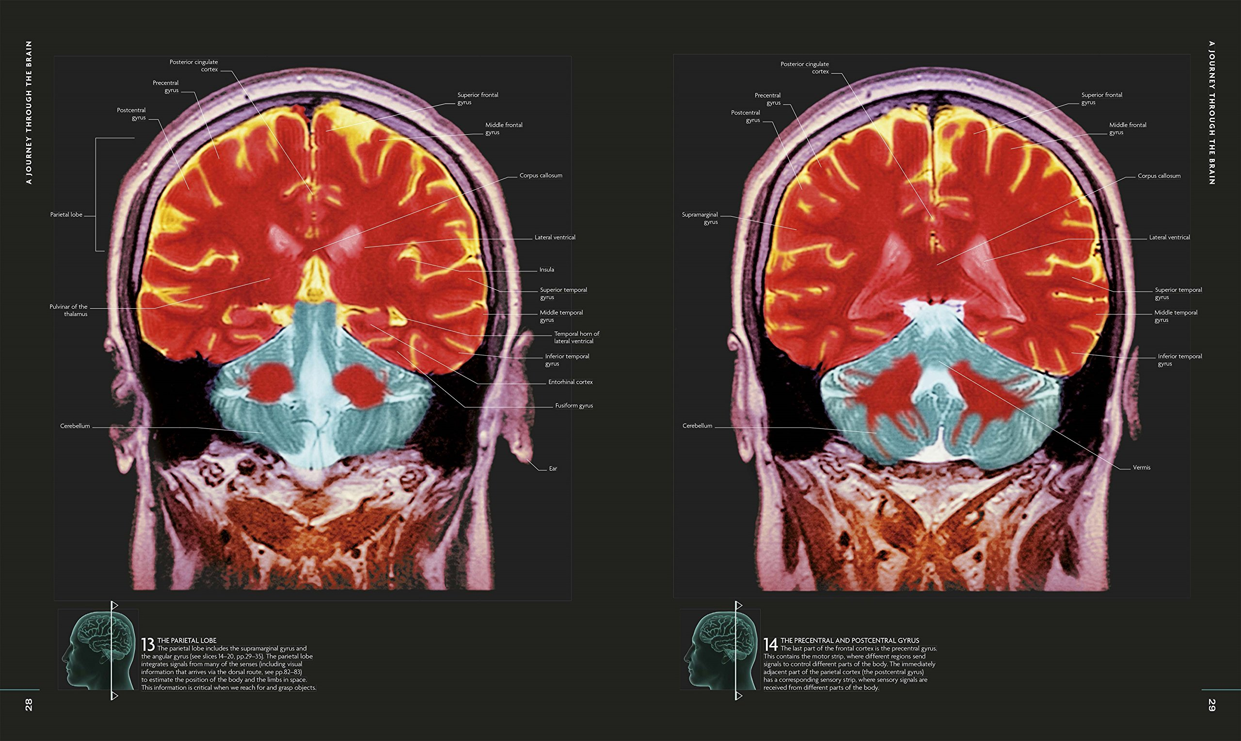 The Brain Book: An Illustrated Guide to its Structure, Functions ...