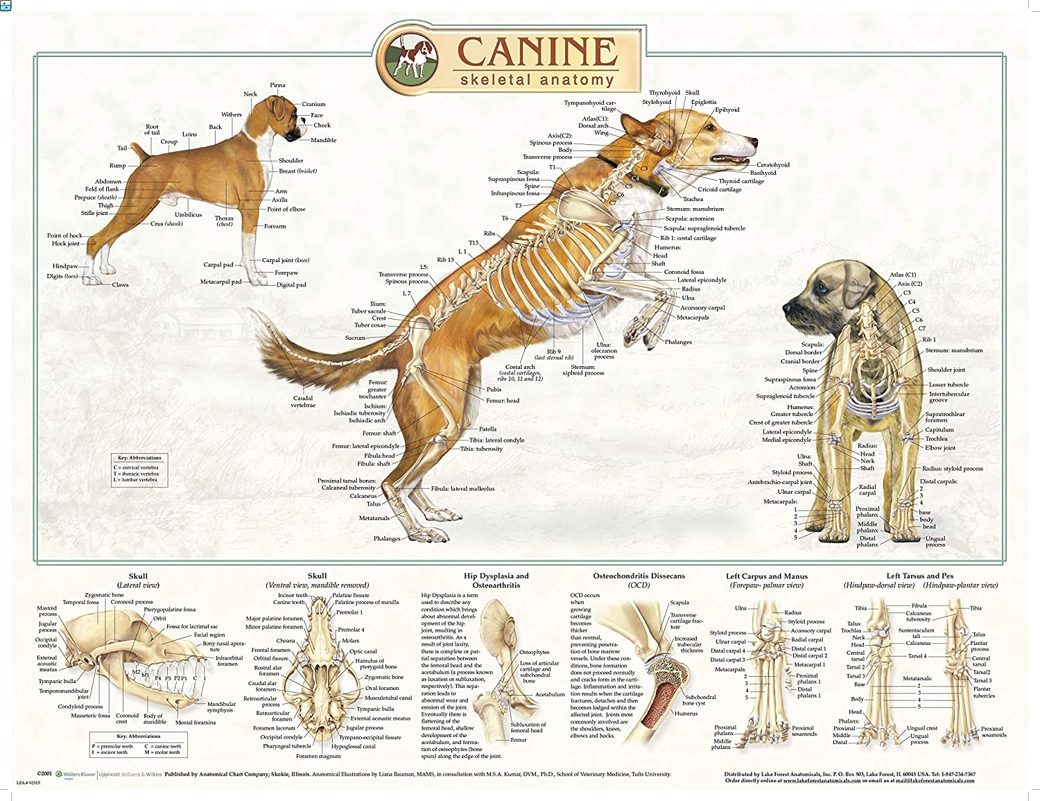 Canine Anatomy Laminated Chart Set of Three, LFA # 92510 ACC