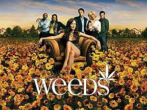Weeds Staffeln