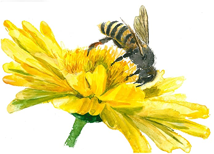 Honey Bee Art Print 8x10Honey