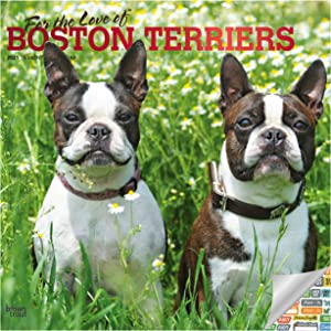 Boston Terriers Calendar 2021 Bundle - Deluxe 2021 Boston Terriers Wall Calendar with Over 100 Calendar Stickers (Dog Lover Gifts, Office Supplies)