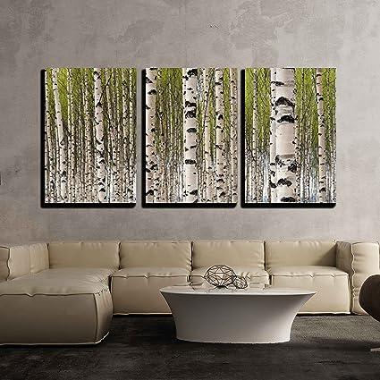 Amazon.com: wall26 - 3 Piece Canvas Wall Art - Grove of Birch Trees ...