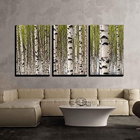Wall26 3 piece canvas wall art grove of birch trees with green leaves in