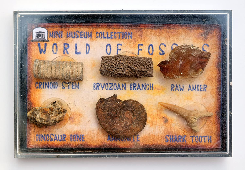 Jurassic Jacks Fossil box Collection Amber TeachTastic