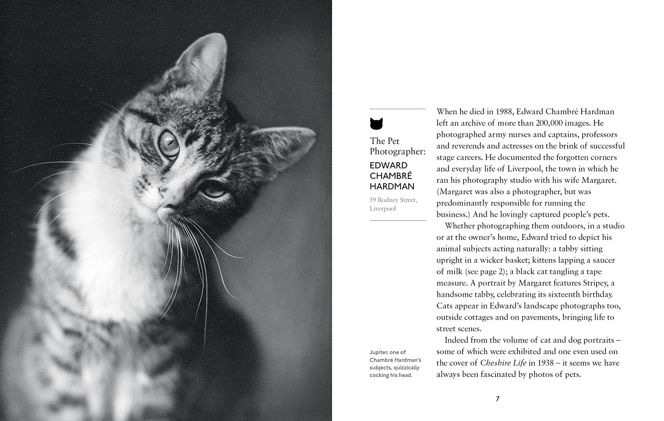 Cats d'Amy Feldman 915k-Bt38wL