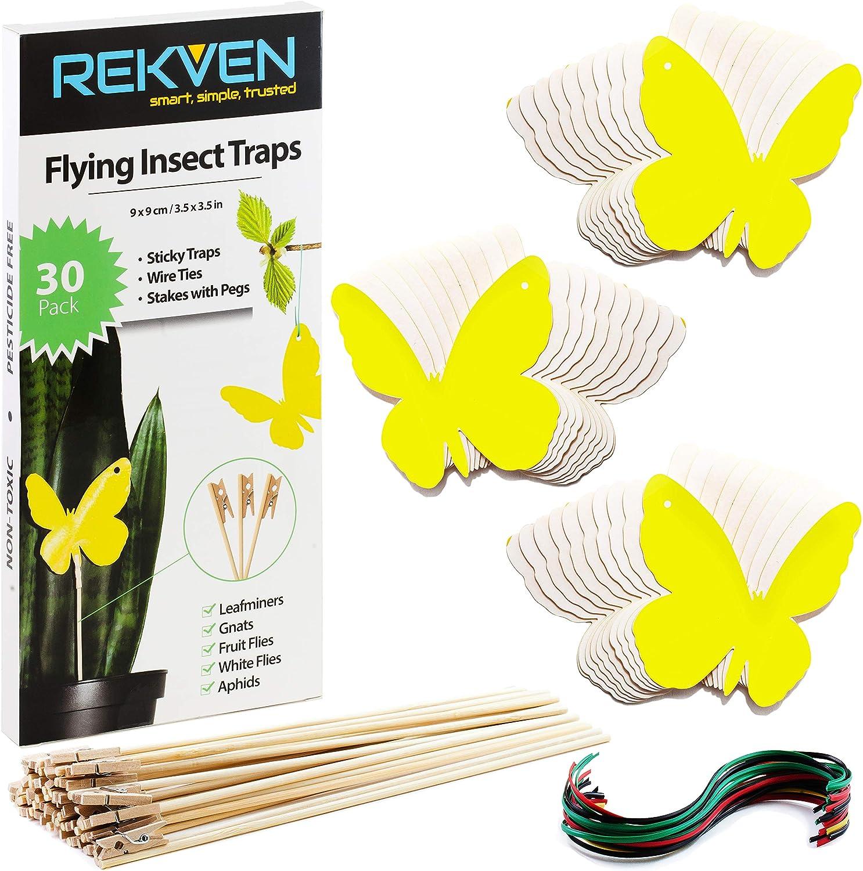 REKVEN - Trampas Adhesivas Pequeñas, Paquete de 30, para Mosca de la Fruta, Mosquito Hongo y Otros Insectos Voladores