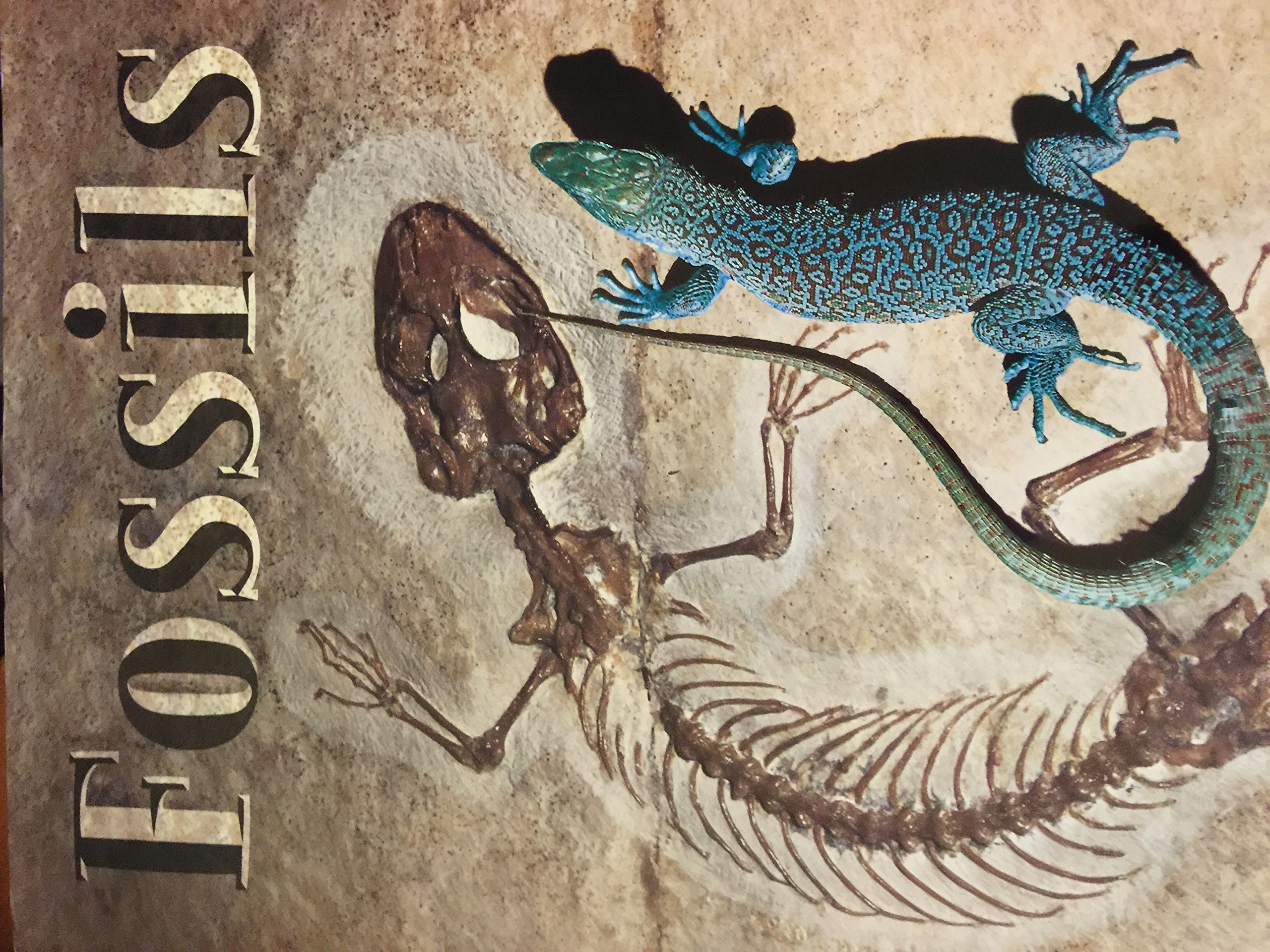 Rigby Literacy: Big Book  Grade 3 Fossils ebook