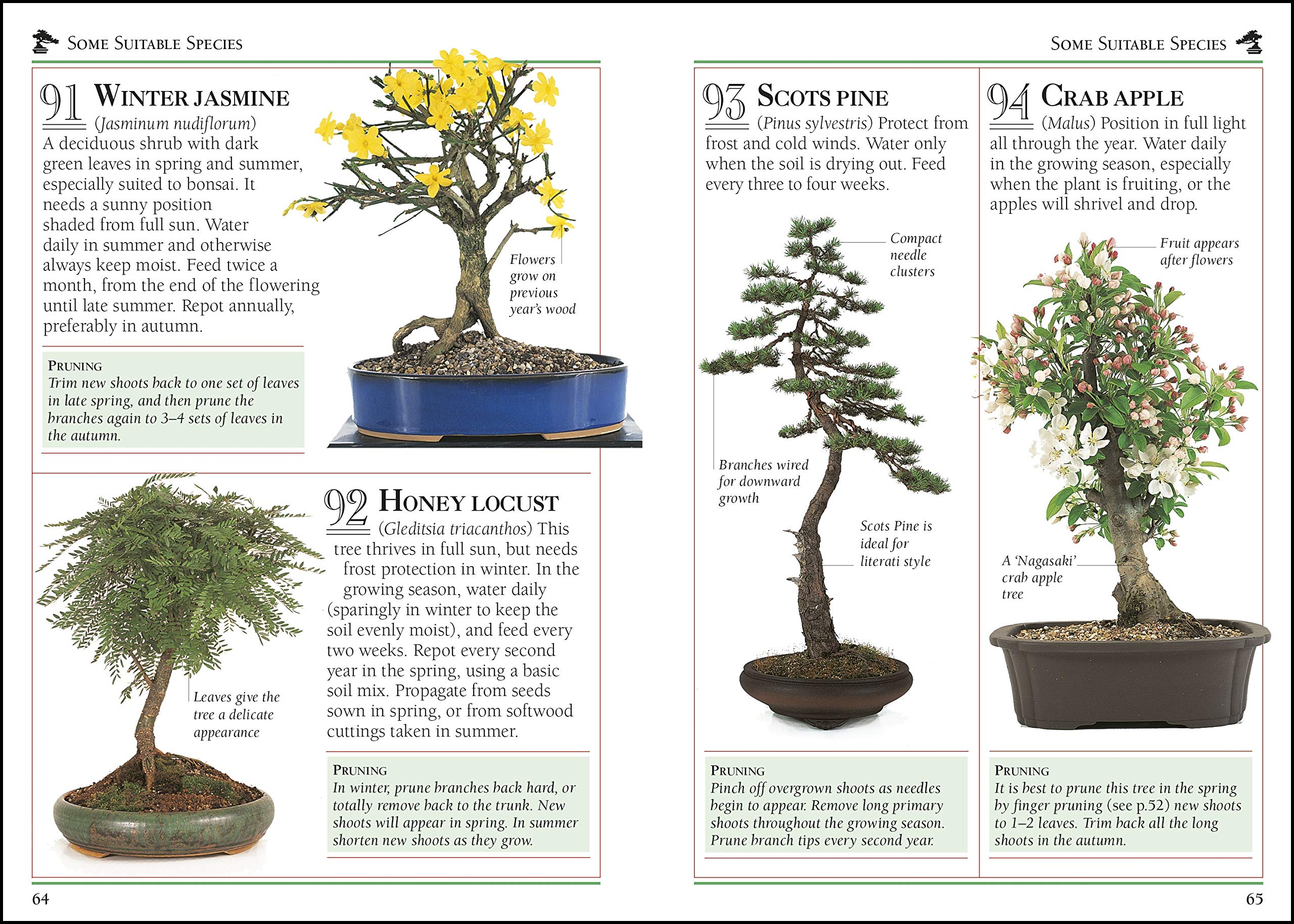 101 Essential Tips Bonsai Breaks Down The Subject Into 101 Easy To Grasp Tips Tomlinson Harry 9780241408599 Amazon Com Books