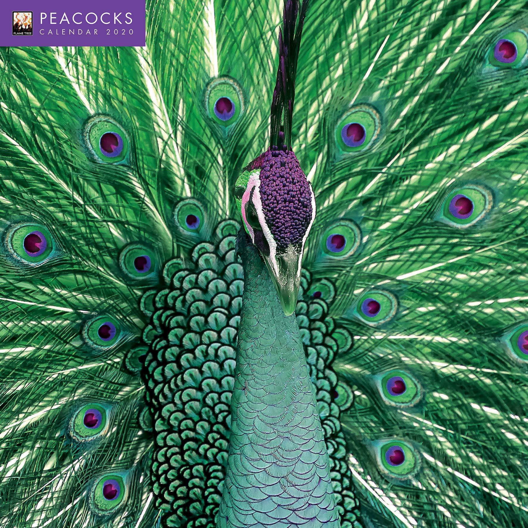 Peacocks Wall Calendar 2020 Art Calendar Flame Tree Studio 9781787553934 Amazon Com Books