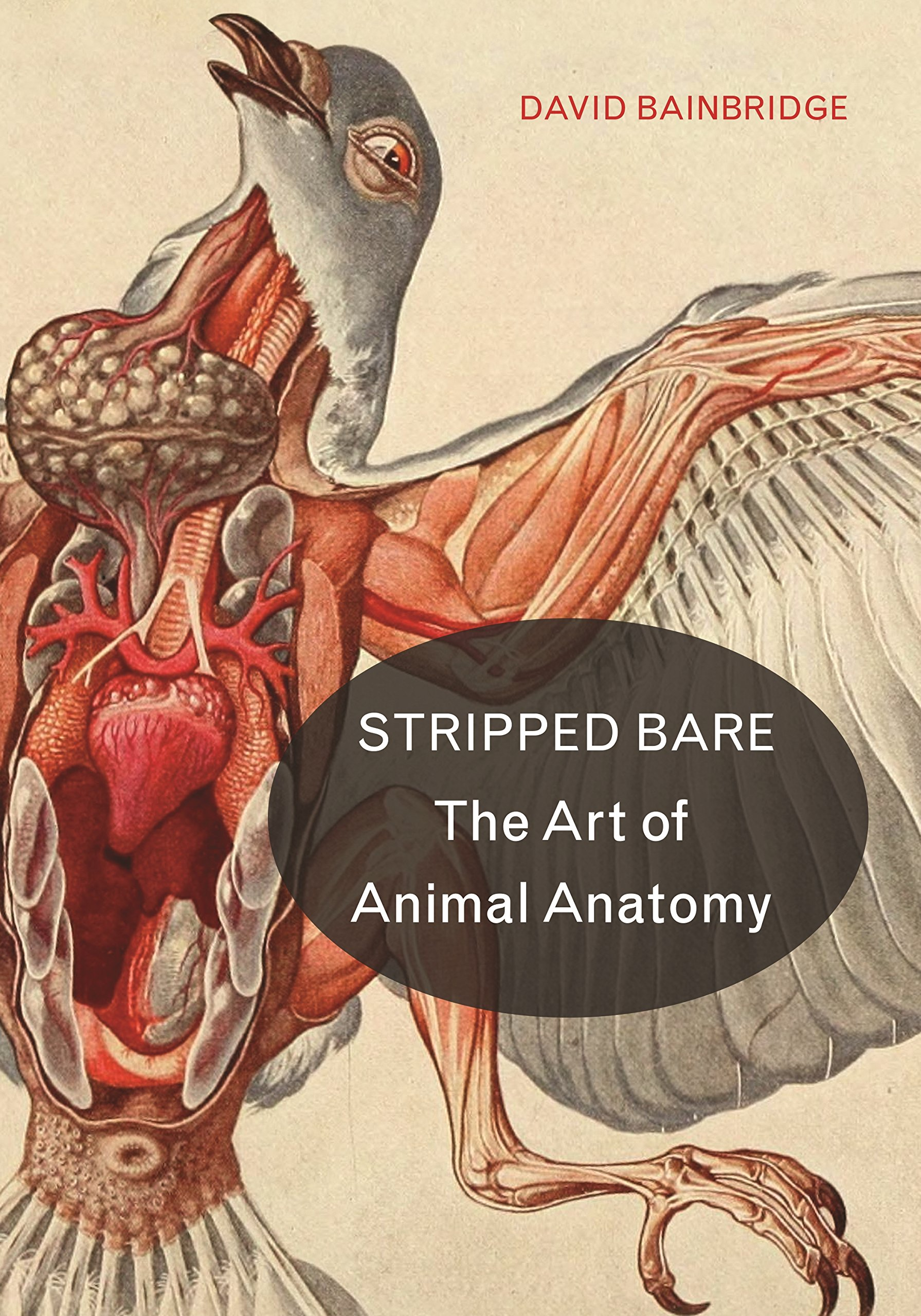 Download Stripped Bare: The Art of Animal Anatomy PDF