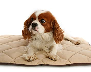 Flectabed Q Petlife Cama térmica para perro/gato, 45,72 x 35,56 cm, color crema: Amazon.es: Productos para mascotas