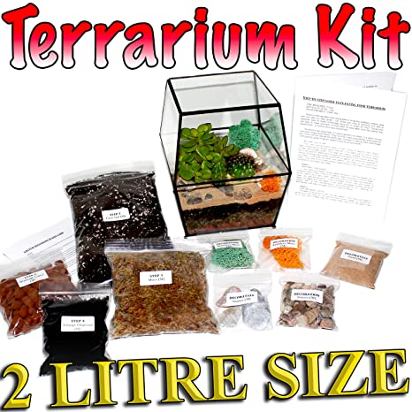 Terrarium Kit Uk Diy Succulent Cacti Plants Step By Step