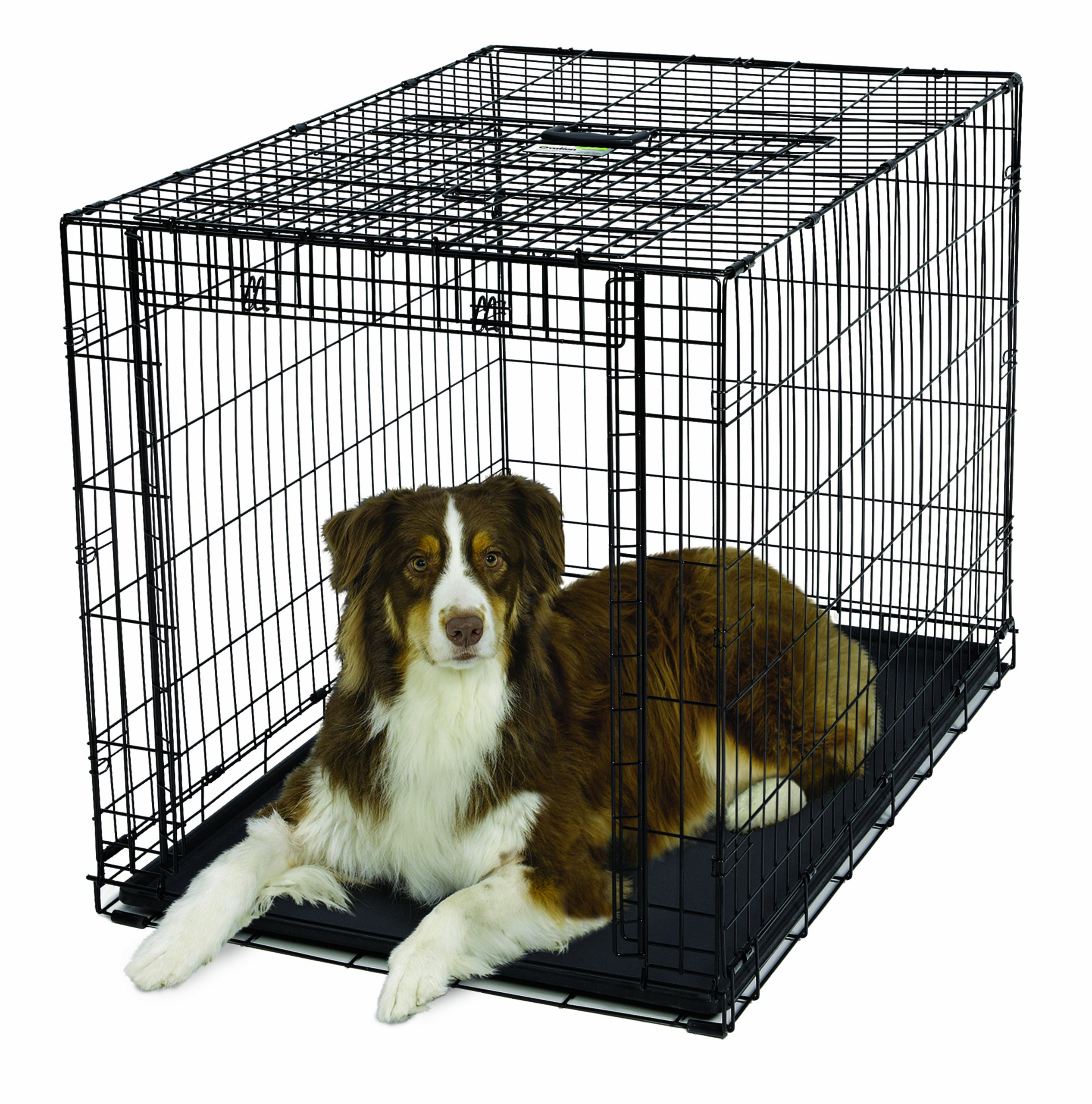 MidWest Homes for Pets Ovation Single Door Dog Crate, 42-Inch by MidWest Homes for Pets