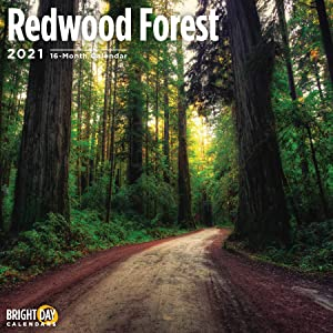2021 Redwood Forest Wall Calendar by Bright Day, 12 x 12 Inch, Beautiful Tree Sequoia Cypress