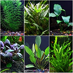 Best Plants for Freshwater Aquarium 2020 Reviews 2