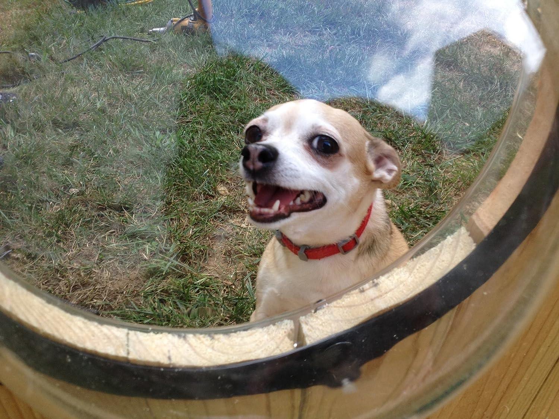 amazon com petpeek fence window for pets pet window perches