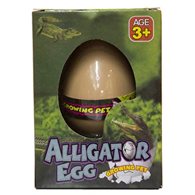 Fun Stuff Grow an Alligator - Alligator Egg Hatching Pet, Just Add Water: Toys & Games