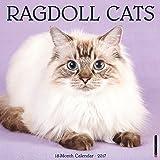 Ragdoll Cats 2017 Wall Calendar