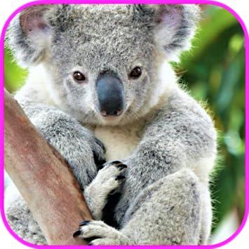 Amazoncom Koala Wallpaper Appstore For Android