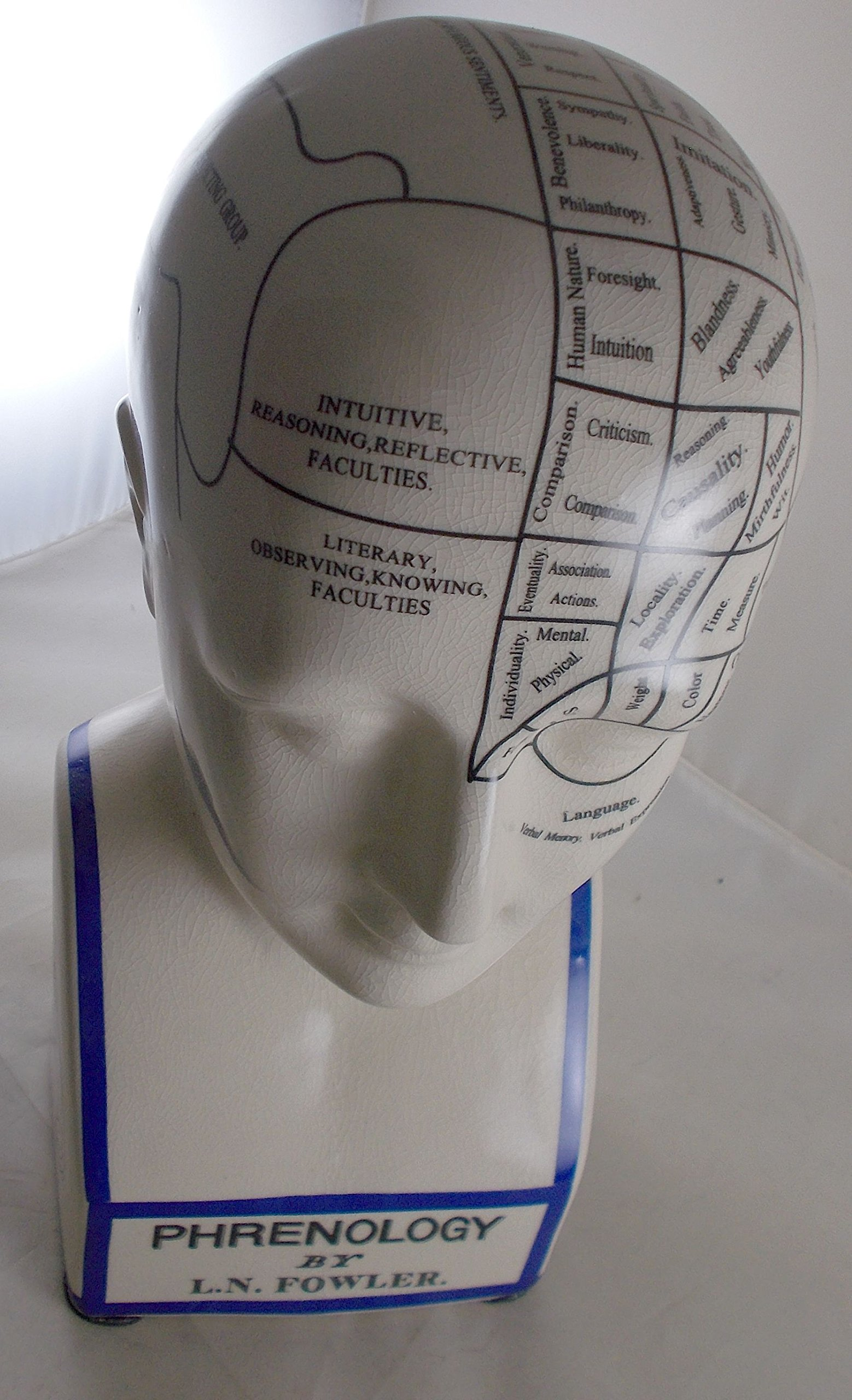 L.N. Fowler Phrenology Head Statue by Magoo's General Store (Image #3)