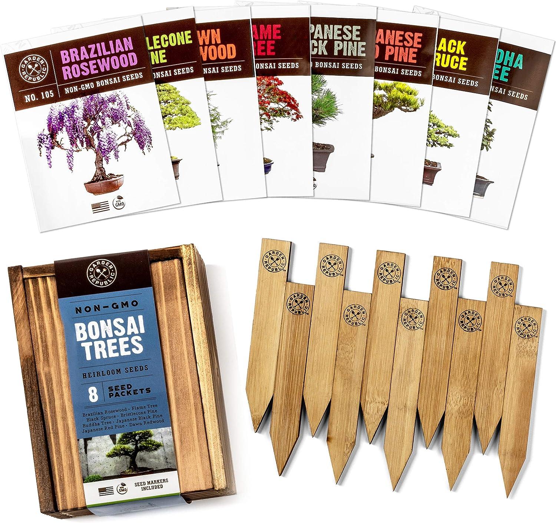 Amazon Com Bonsai Tree Seeds Kit 8 Popular Varieties Of Non Gmo Mini Bonsai Trees Bamboo Plant Markers Wood Gift Box Bonzie Tree Seed Starter Kits Grow Bonzai Indoor Garden