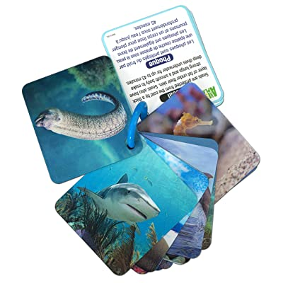 Smart Play Animal Planet 3D Flash Cards - Marine Animals: Toys & Games