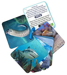 Animal Planet 24451 3D Flash Cards-Marine Animals