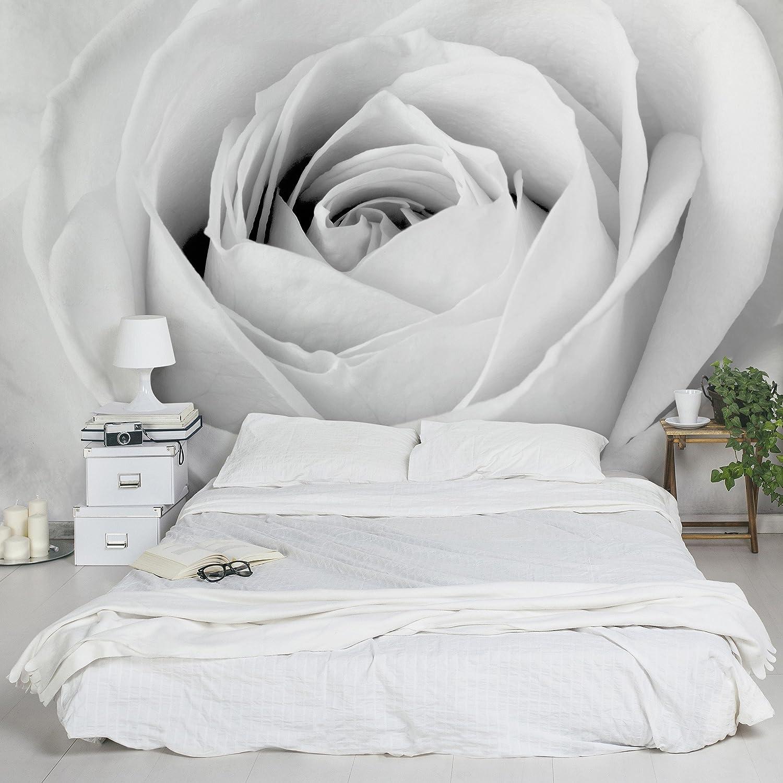 Apalis Vliestapete Blumentapete Close Up Rose Fototapete Breit   Vlies Tapete Wandtapete Wandbild Foto 3D Fototapete für Schlafzimmer Wohnzimmer Küche   grau, 94564