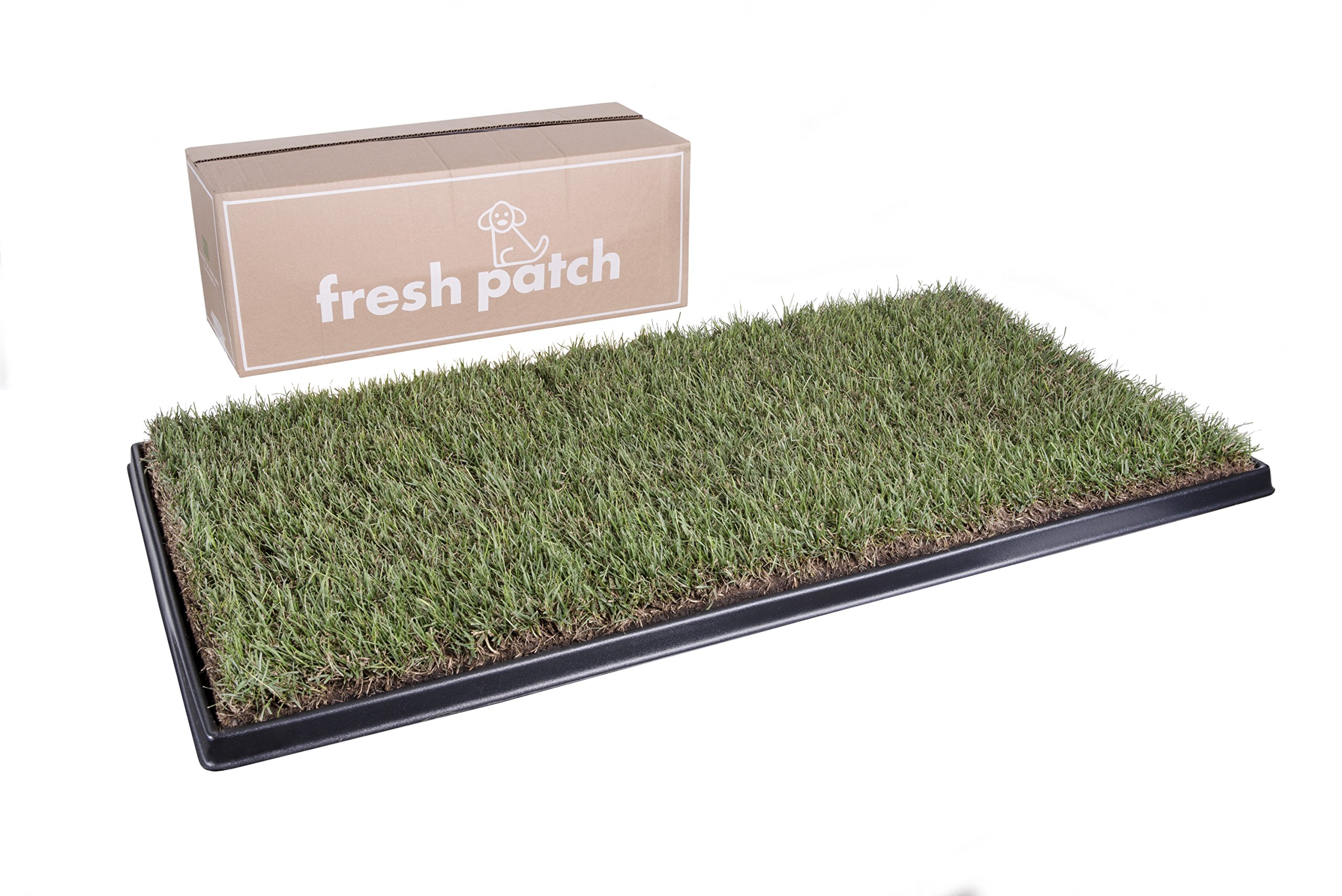 Fresh Patch Real Grass Training Sod as Seen on Shark Tank, 48'' L x 24'' W by Fresh Patch