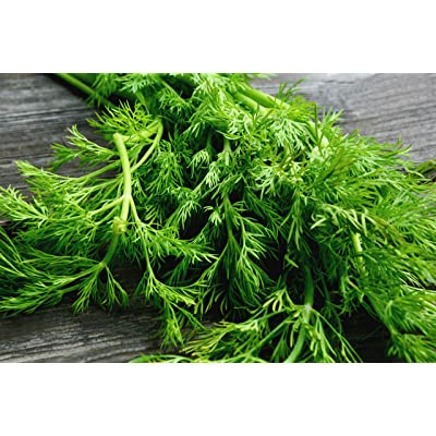 Sweet Yards Seed Co. Organic Dill 'Bouquet' Seeds – Over 250 Open Pollinated Non-GMO Seeds: Garden & Outdoor