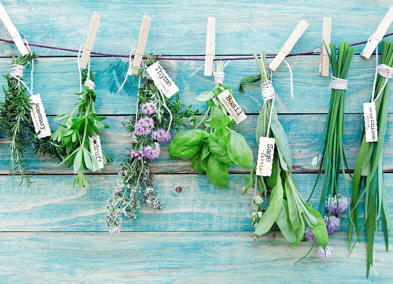 Crearreda CR-67207 Herbs Kitchen Panel