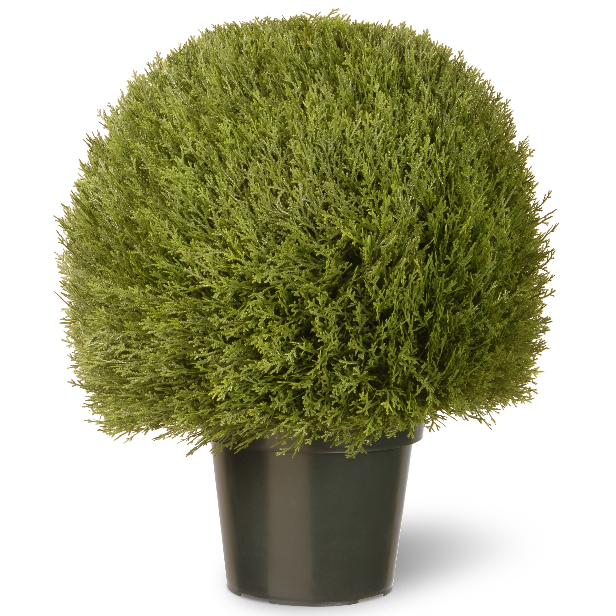 National Tree 24 Inch Cedar Pine Topiary in Green Pot (LCPT4-700-24) by National Tree Company