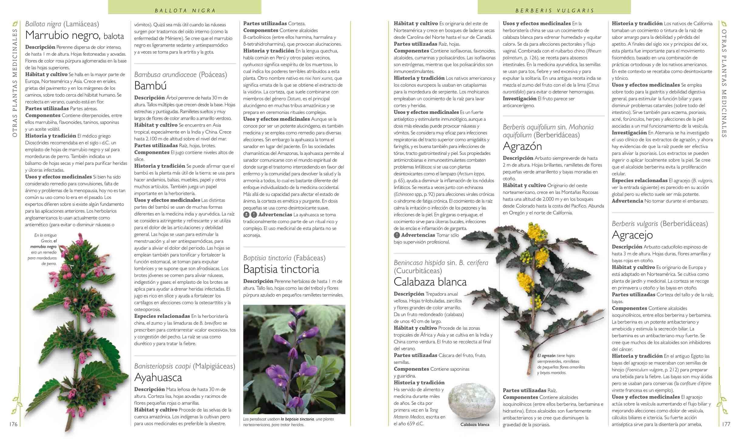 Enciclopedia De Plantas Medicinales Andrew Chevallier