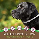 Lanalux Flea Collar - Flea and Tick Prevention for