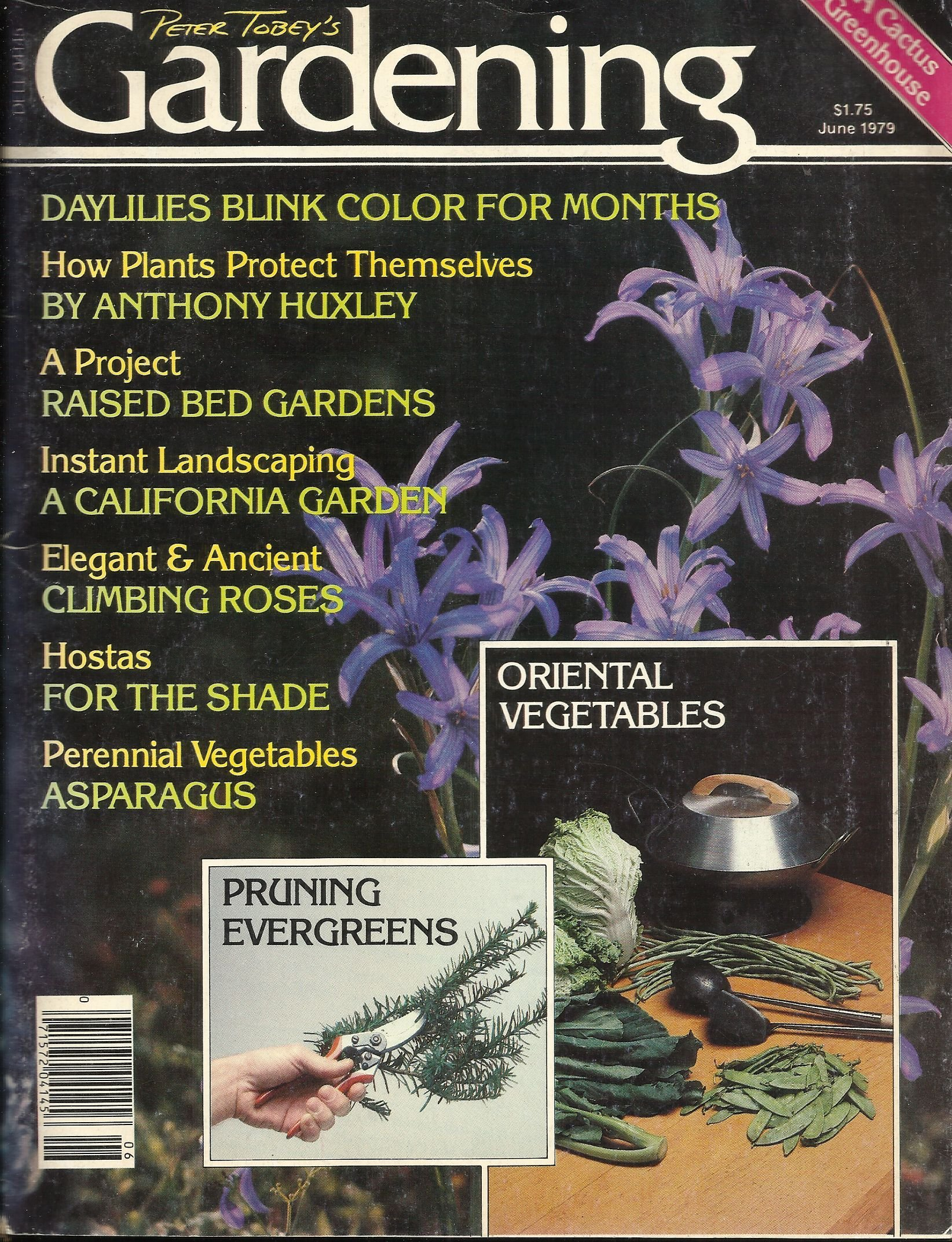PETER TOBEY'S GARDENING JUNE 1979 (A CACTUS GREENHOUSE ; DAYLILIES BLINK COLOR FOR MONTHS ; HOW PLANTS PROTECT THEMSELVES ; A PROJECT ; ELEGANT & ANCIENT ; HOSTAS ; PERENNIAL VEGETABLES - ASPARAGUS AND MORE
