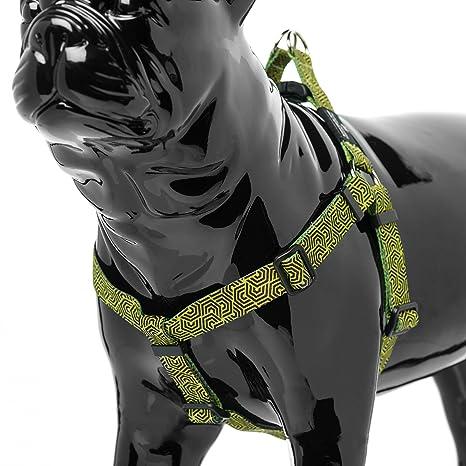 Dorsal Cactus para perro | Super confortevole| Full Control ...