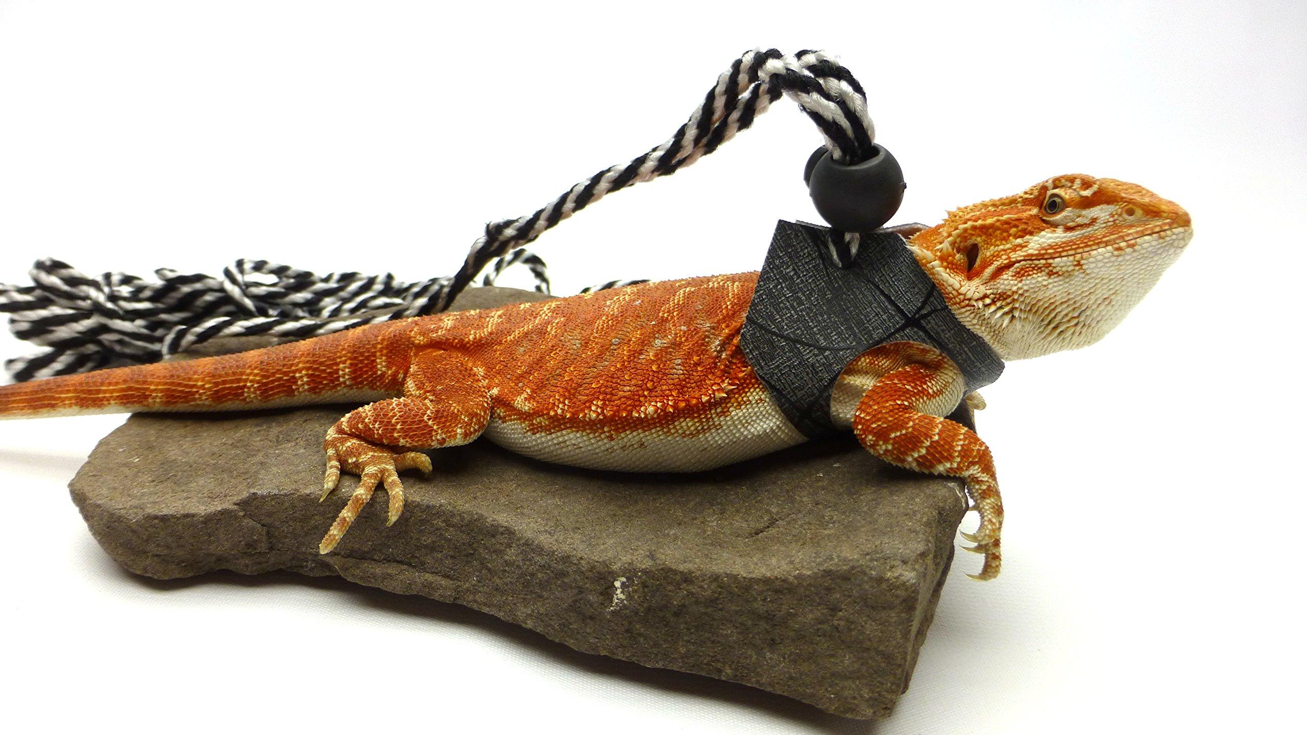 Ogle Lizard Leash, Limited Edition Black Web (medium size)