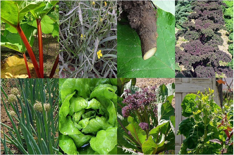 Permacultura - Set de regalo- Semillas con 8 plantas que son muy ...