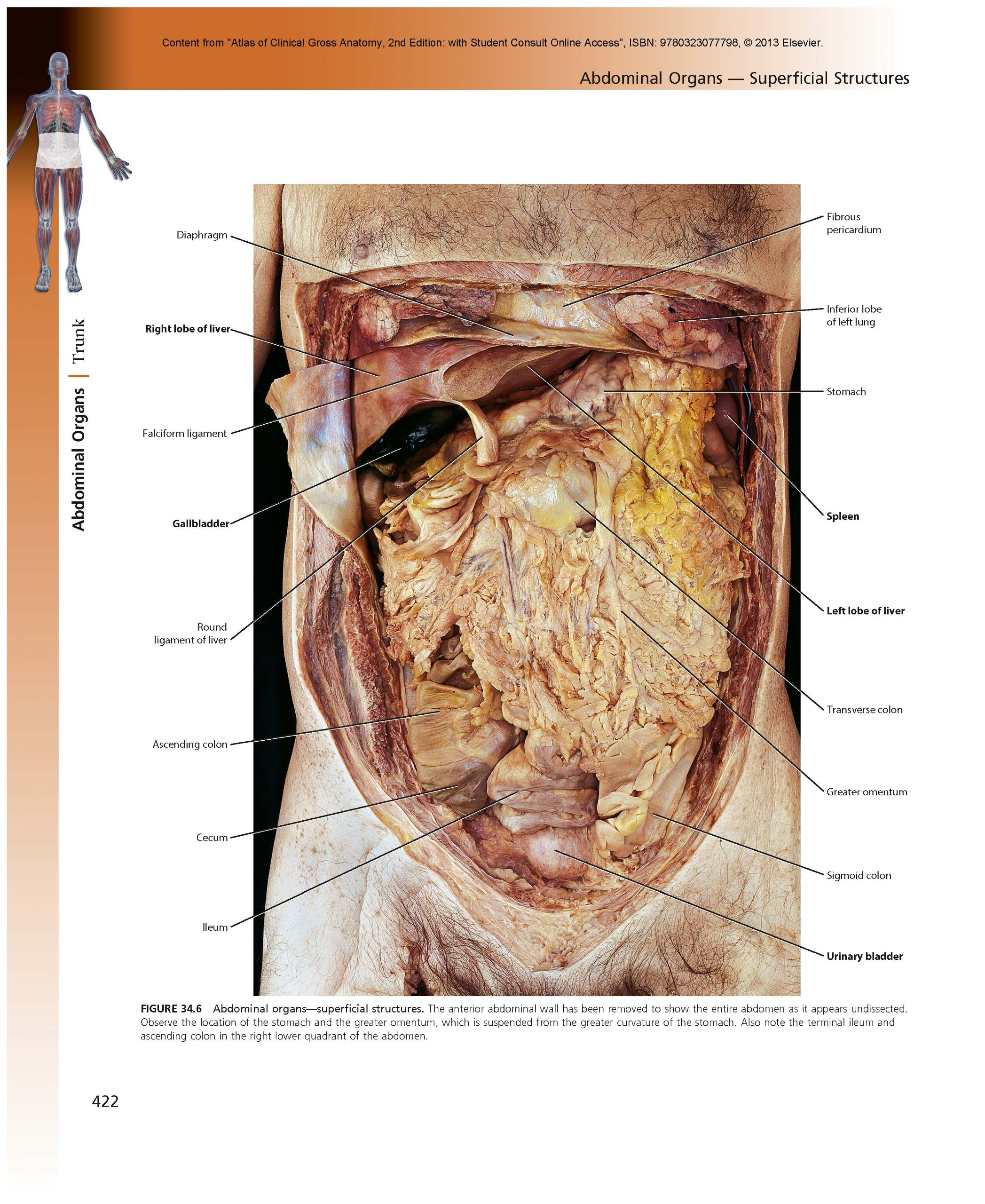 Atlas Of Clinical Gross Anatomy With Student Consult Online Access