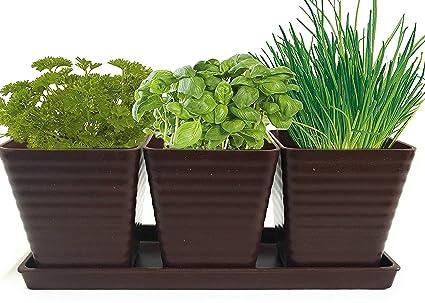Amazon.com: Crecer 5 hierbas con Burpees hierba jardín ...
