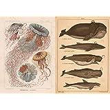 2枚 ビュフォン クジラ A1複製ポスター 1925年→2019年 + クラゲポスター(2019年までのキャンペーン)