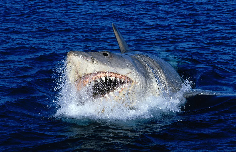 Ungewöhnlich Große Weiße Hai Malvorlagen Ideen - Druckbare ...