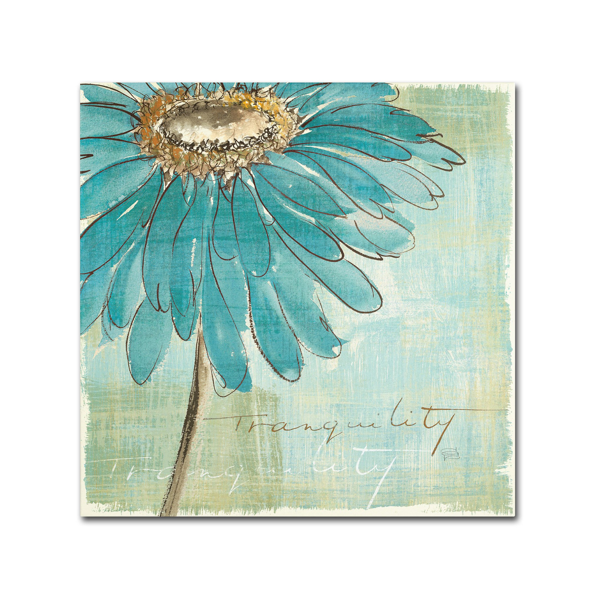 Trademark Fine Art Spa Daisies III by Chris Paschke Wall Decor, 24 by 24-Inch Canvas Wall Art