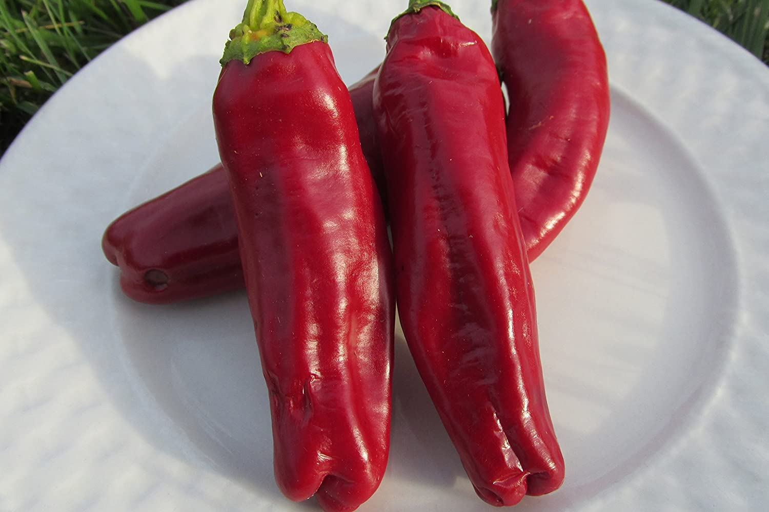Organic Aleppo Pepper Seeds (Halaby Pepper, pul biber) 20+ Seeds by Ohio Heirloom Seeds