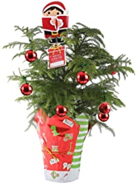 costa - Real Mini Christmas Tree
