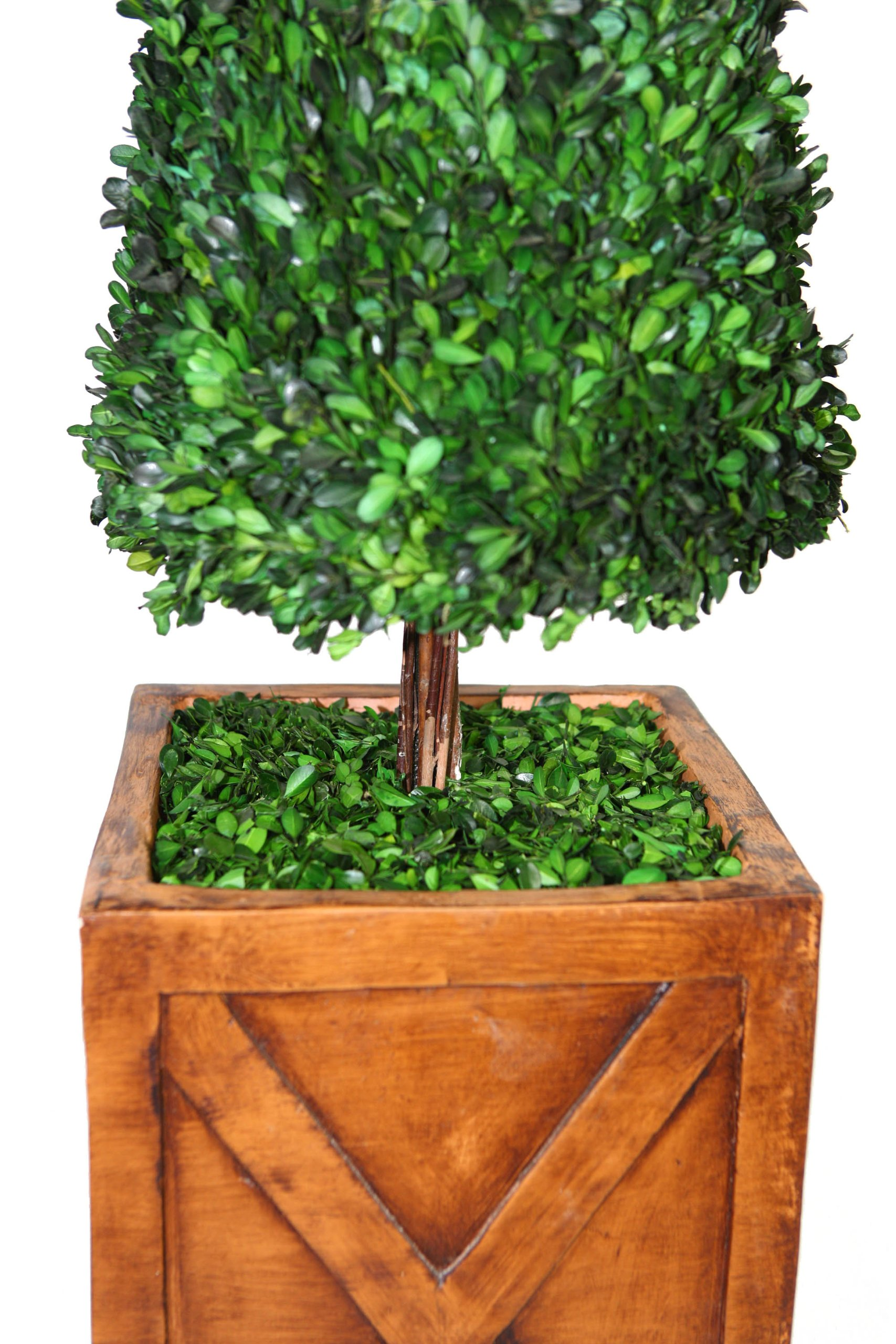 Laura Ashley 53 Inch Tall Preserved Natural Spiral Boxwood Cone Topiary in 13 Inch Fiberstone Planter by Laura Ashley (Image #2)