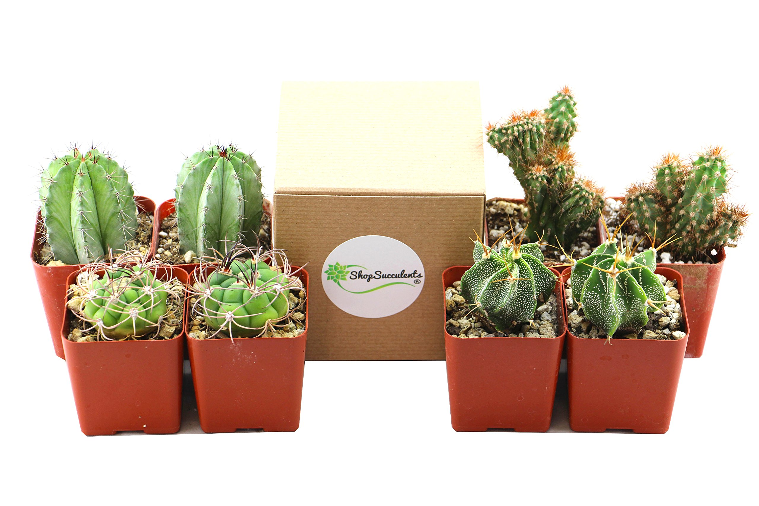Shop Succulents | Cool Cactus of of Live Succulent Plants, Hand Selected Variety Pack of of Cacti in 2.5'' pots | Collection of 8