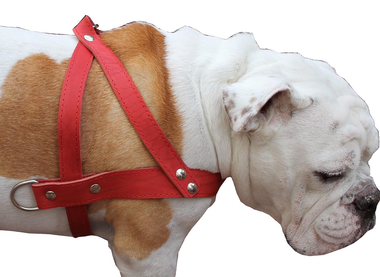 acquista marca Alta qualità qualità qualità del cane tira camminare imbracatura. Cinghie torace da a 78,7 - 88,9 cm, larghezza 3,8 cm. Pitt Bull, rossotweiler  comodamente