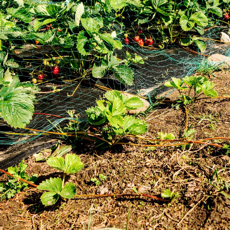 Disques Parterres de Fleurs ANSIO Membrane de contr/ôle des Mauvaises Herbes Paysage de Tissu Couverture de Sol Id/éal pour Les patios Am/énagement paysager 2 x 5M Jardin Les sentiers